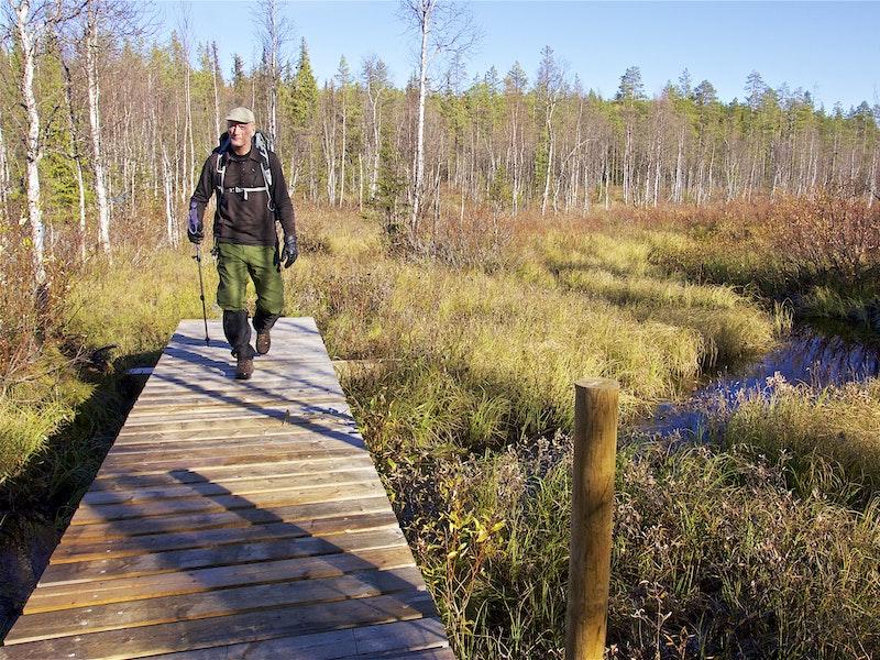 Vandring Björnlandets nationalpark